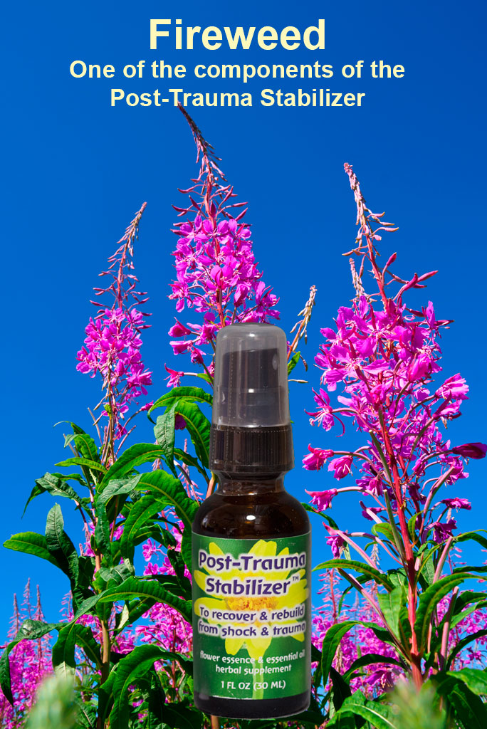 Fireweed for Relief from Shock and Trauma