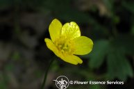 Buttercup: Feeling Self-Worth Through Active Presence in the World