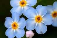 Forget-Me-Not: Strength of Love Beyond the Boundary of Earth Life