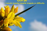 Gorse: A Remedy For Hopelessness