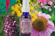 Use Magenta Self-Healer to Catalyze Self-Healing Potential & Vitality