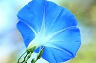 Morning Glory: Re-setting the Body Clock to the Refreshing, Health-Giving Forces of the Morning