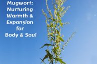 Mugwort: Grounded Bodily Awareness and Expansion of Consciousness