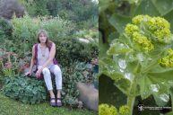 Lady's Mantle: Magnetic Connection To All Substances, Human, Animal Or Plant