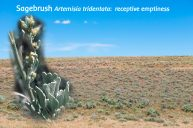 Sagebrush For Letting Go Of The Old and Receiving The New