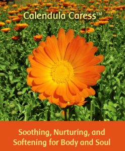 Calendula Caress