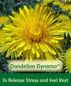Dandelion Dynamo