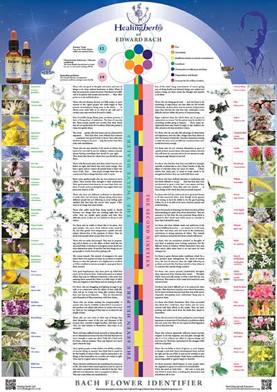 healing herbs poster