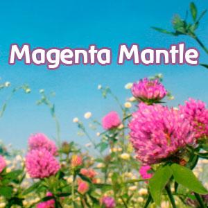 Magenta Mantle Formula