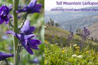 The Guiding Power of Tall Mountain Larkspur