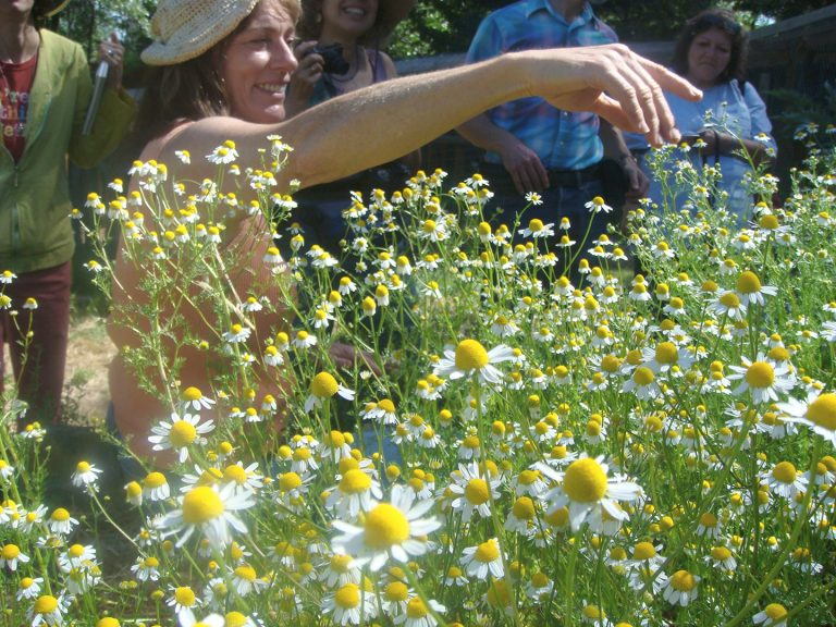 Patricia teaching about the Chamomile flower in the Terra Flora Gardens
